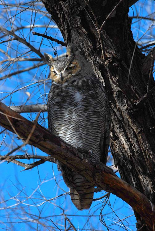 And A Great Horned Owl Too!