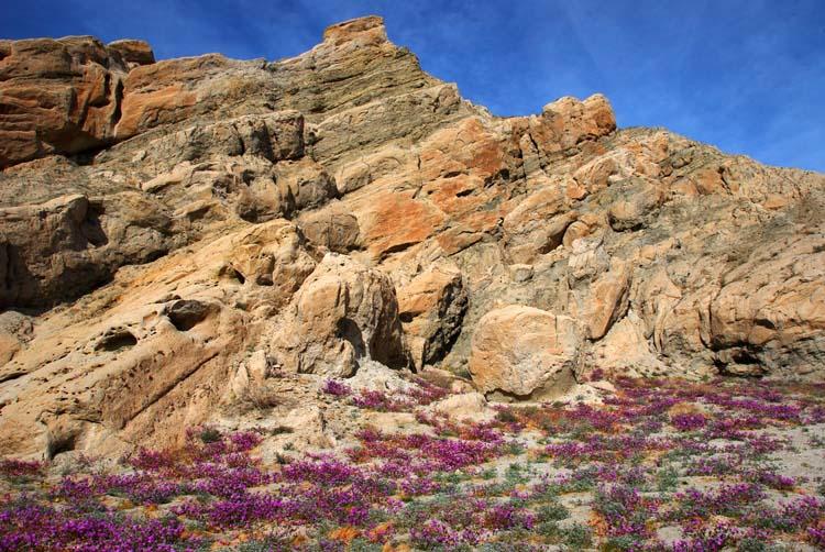 Desert Bloom in Box Canyon