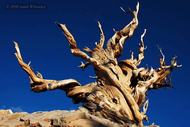 Beautiful Old Tree Friend