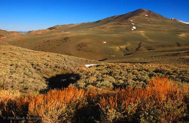 High Mountain Fields of the White Mountains