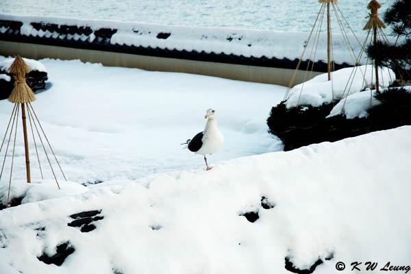 Snow Scene 01