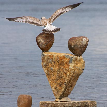 The Gull Has Landed 16957