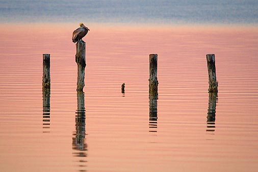 Pelly On A Piling 39491