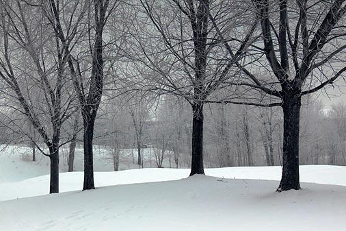 Snowscape 12734