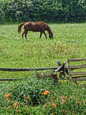 Grazing Horse 20100714