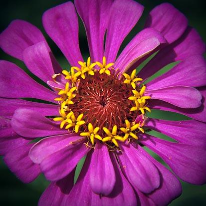 Purple Flower 20100718