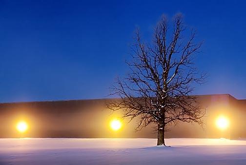 Tree In First Light Fog 20110118