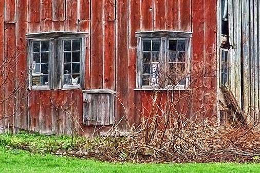 Old Barn DSCF01580