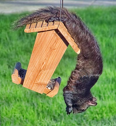 Squirrel Feeder 20110509