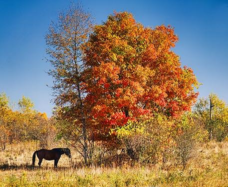 Autumn Horse 20110925