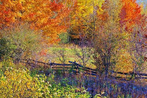 Autumn Scene 16790-1