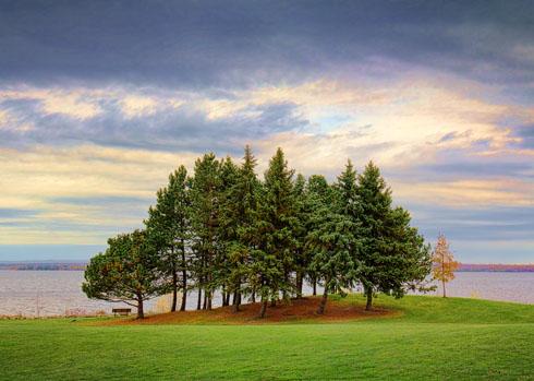 Riverside Trees 18151-2