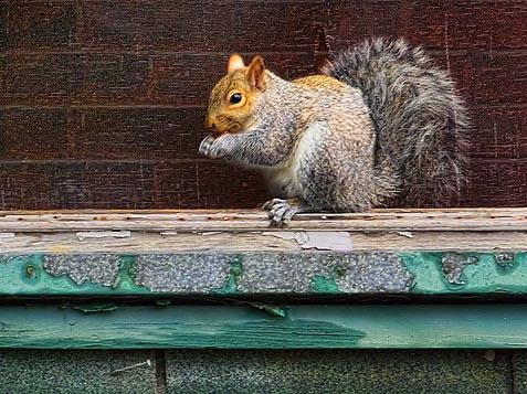 Squirrel At Breakfast DSCF03394