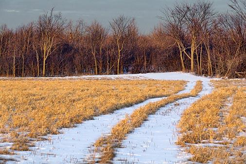 Snowy Field Lane 20120111