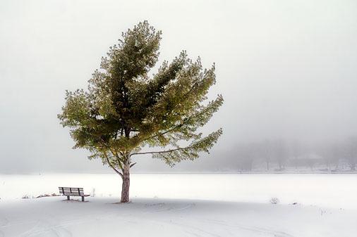 Bench & Tree 20120212