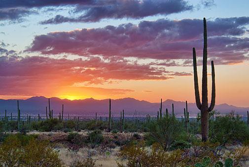 Desert Sunset 74323-4