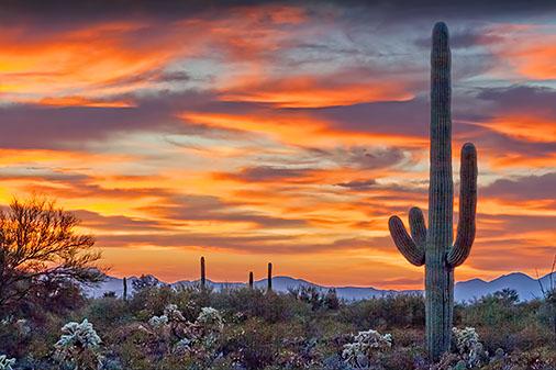 Arizona Sunset 76045