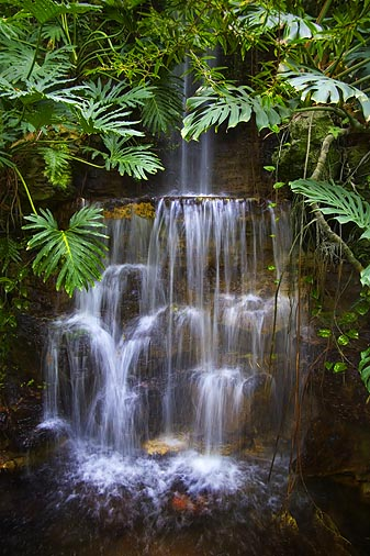 Rainforest Waterfall 20060416