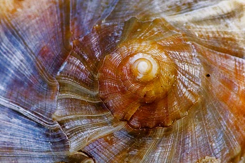 Seashell Closeup 45999
