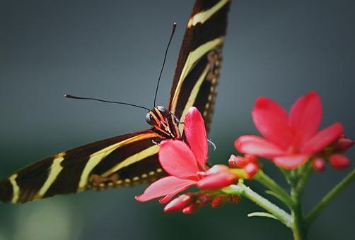 Butterfly 20070505