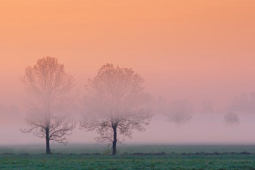 Two Trees In Predawn Mist 20070519