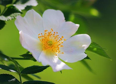 White Flower In Shadow 60907