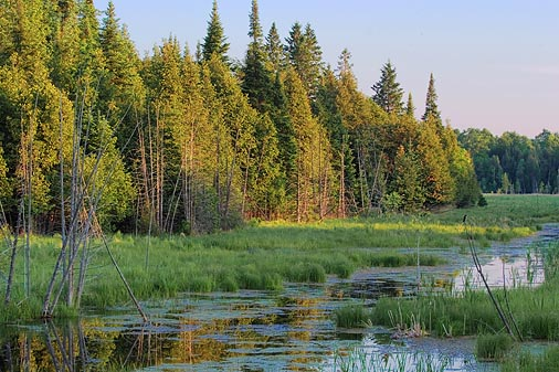Marsh In Evening Light 61012