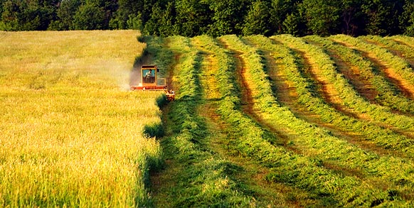 Mowing the Hay 61331