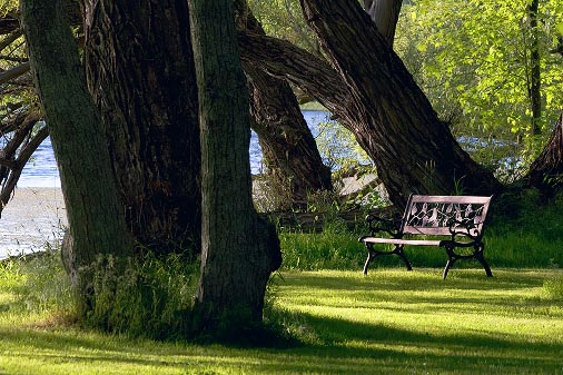 Bench Beside The River 61860