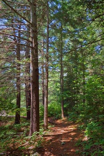 Morris Island Trail 62249