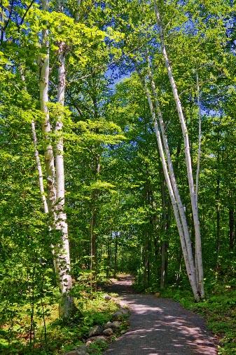 Morris Island Trail 62218
