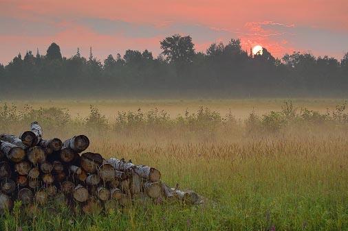 Log Pile At Sunrise 20070726