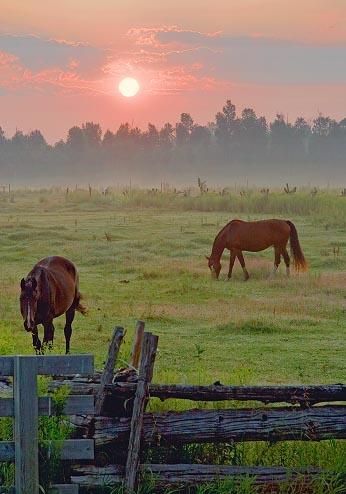 Two Horses At Sunrise 63834