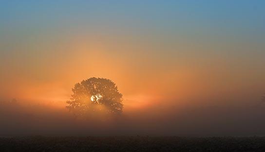 Tree In Misty Sunrise 64121