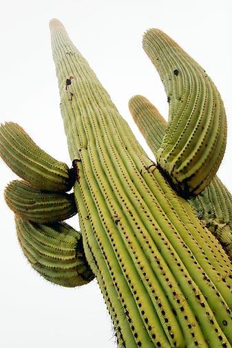Saguaro In Fog 20071212