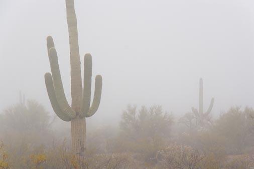 Desert Fog 76915