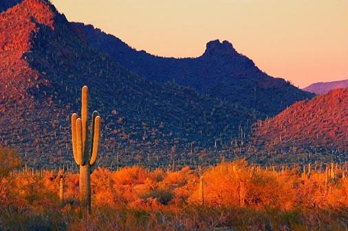 Desert At Sunset 82527