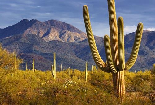 Desert Morning 20080220