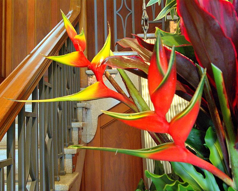 Cairns - 30 Art Gallery Flowers IMGP7431.JPG