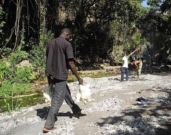 La mare aux silures sacrés de Dafra. Les gens viennent ici pour faire des sacrifices (poulets, moutons etc.). Burkina Faso