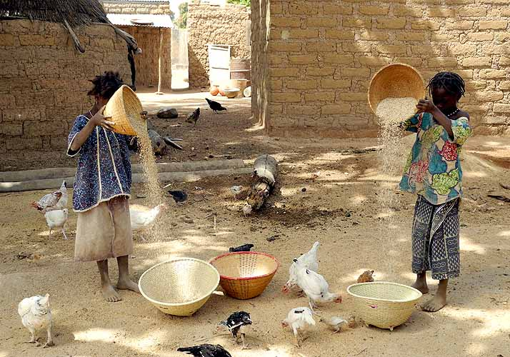 Girls winnowing millet , Burkina Faso