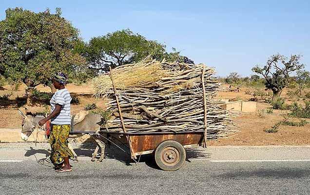 Donkey cart carrying firewood, Burkina Faso