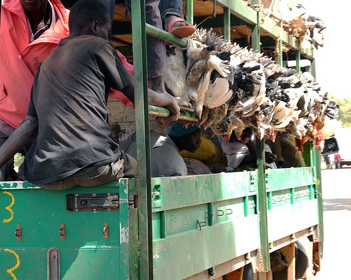 Transport of people and chickens, Burkina Faso