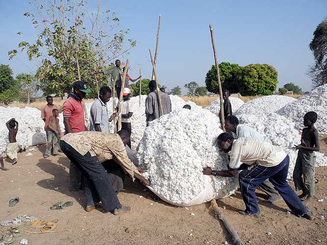 Farmers put their cotton on cloths. Later the cotton will be transported by trucks. Burkina Faso