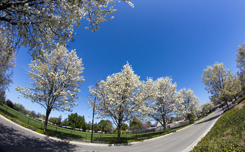 Spring Lane