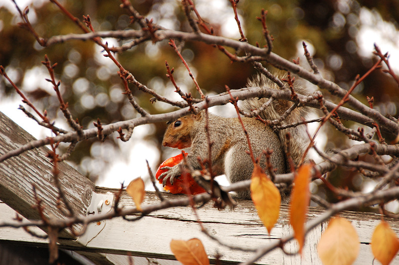 Squirrel Snacking