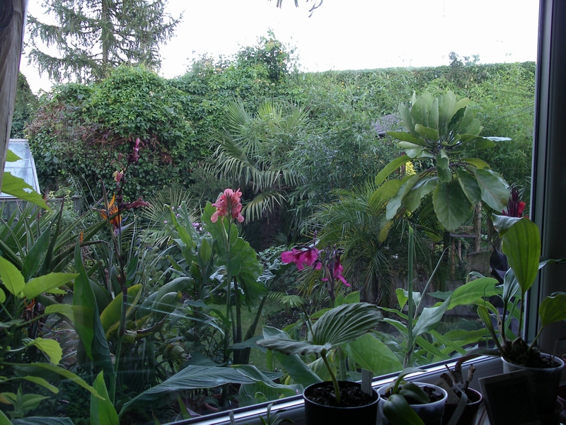 View from kitchen window (Aug 08)