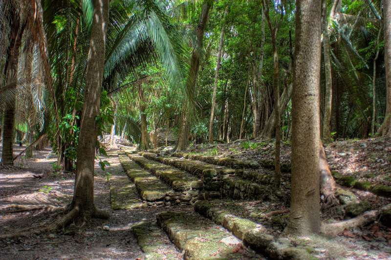 Steps in the Jungle