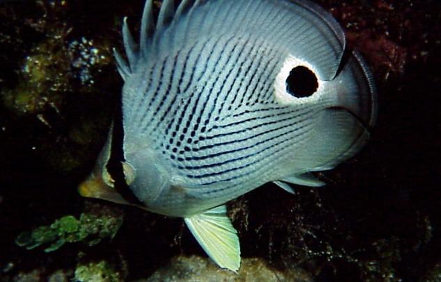 25Fish.jpg