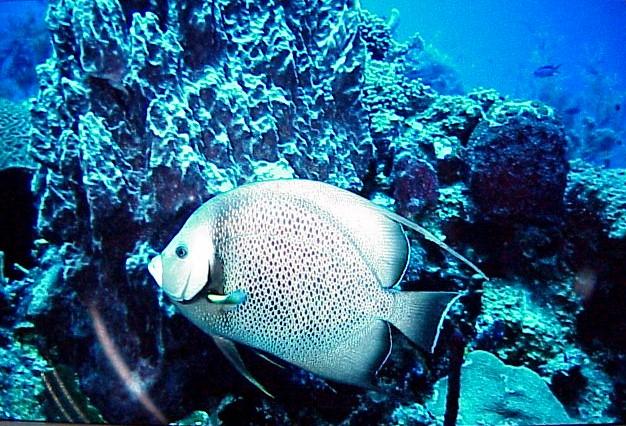 28Fish.jpg